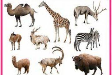 پستانداران
