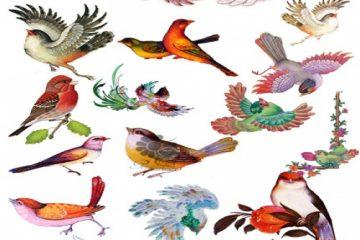 وکتور پرنده های اسلیمی و مینیاتوری با فرمت png