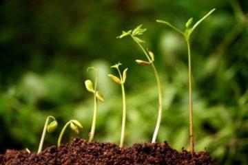 پاورپوینت کامل و جامع با عنوان فیزیولوژی بذر در 65 اسلاید