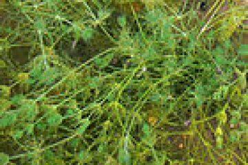 پاورپوینت کامل و جامع با عنوان بررسی گیاهان (Plants) و گونه ها و ویژگی های آن ها در 41 اسلاید